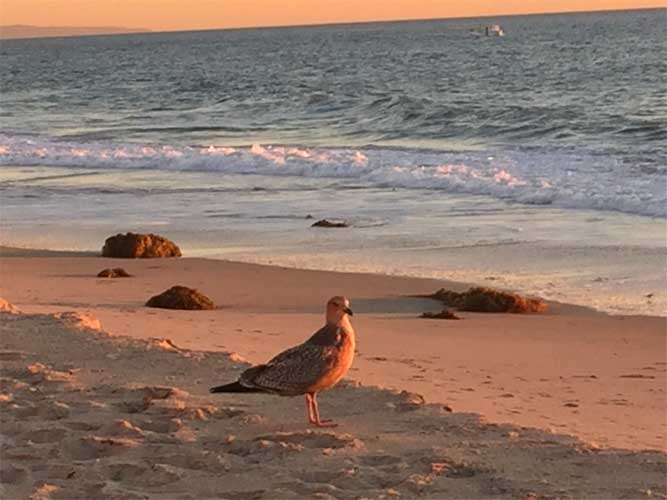 Bird on Beach 11-17-2015