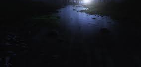 Forest Stream at Night